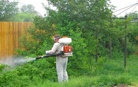 komar na uchastke