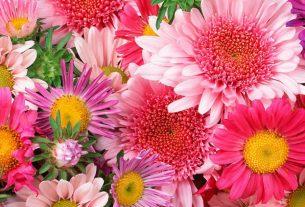 bukety iz zhivyh cvetov