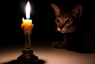 1513271929cat and candle cropped 5db301c8298c8